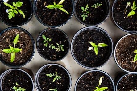 Как создать и реализовать стратегию роста