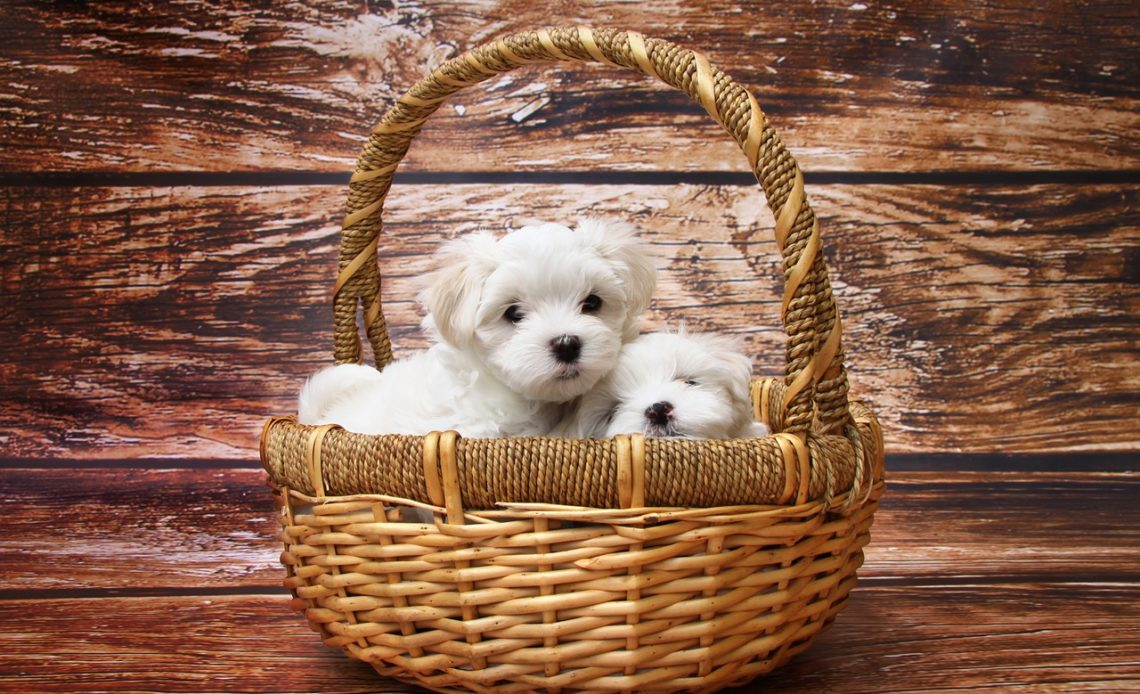 Huge Increase In Pet Care Ecommerce